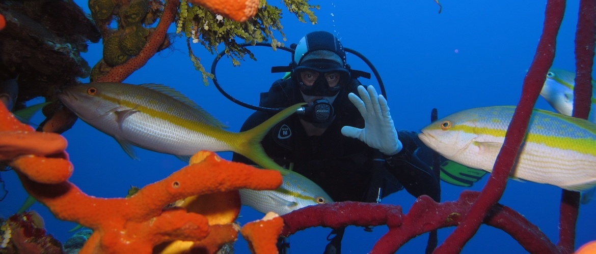Scuba diving in the best dive spots