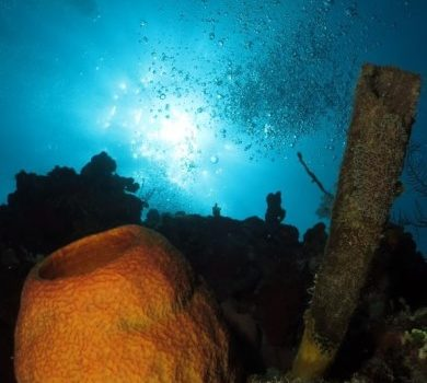Viaje de buceo por Playa Larga, Cienfuegos y Trinidad